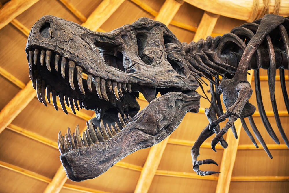 Middle school, high school, and college students, The Colorado Museum of Natural History in DENVER, CO is looking for volunteers.