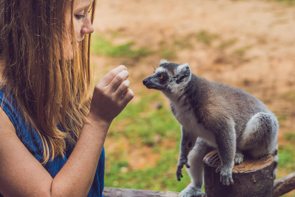 Middle school, high school, and college students, Greater Los Angeles Zoo Association in LOS ANGELES, CA is looking for volunteers.